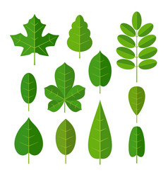 set leaf flat color isolated vector image vector image