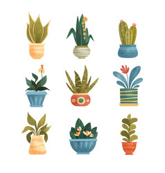 houseplants in a pots set elegant home or office vector image