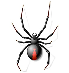 Black Widow spider vector image vector image