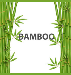 creative of chinese bamboo vector image