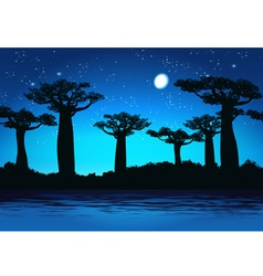 Baobabs At night vector image