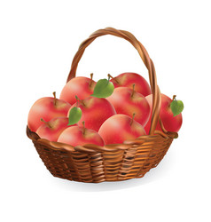 Basket with apples harvest apples vector