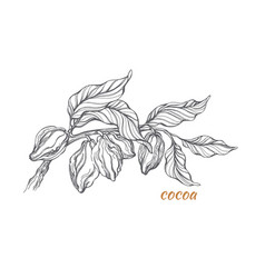 cocoa branch 1 vector image