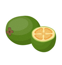 feijoa tropical fruit cartoon flat style vector image