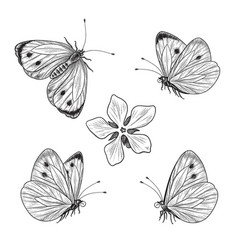 hand drawn flying and sitting butterflies set vector image