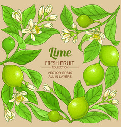 lime branches frame on color background vector image
