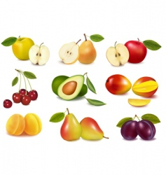 super group colored fruits vector image vector image