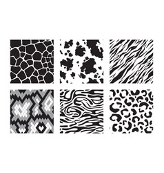 animals skins patterns tiger giraffe zebra vector image
