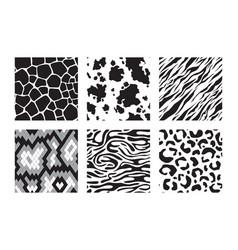 animals skins patterns tiger giraffe zebra vector image