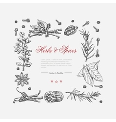 Frame of spices and herbs vector