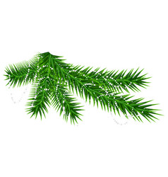 green pine fir branch and rare snow snowflake vector image