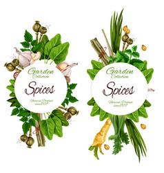Organic spices and herbal garden seasonings vector
