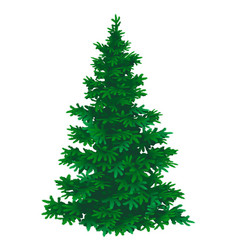 pine tree on a white background vector image