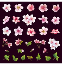 set flower cherry tree and leaf vector image