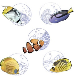 Set of colorful tropical fishes vector image