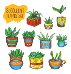 Set of isolated succulent plants agave aloe vera vector