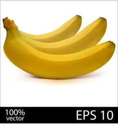 Three bananas in batch vector image