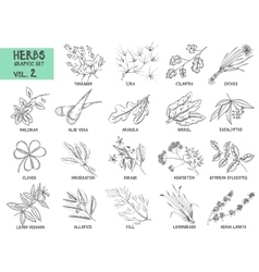 Hand drawn set herbs and spices vintage vector