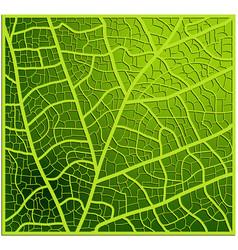 leaf texture veins background design beautiful vector image