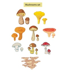 Mushrooms set detailed vector