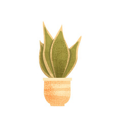 sansevieria house plant elegant home or office vector image