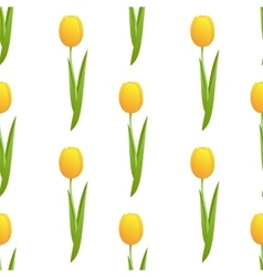 tulip seamless isolated vector image