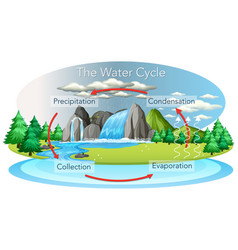 Water cycle process on earth - scientific vector