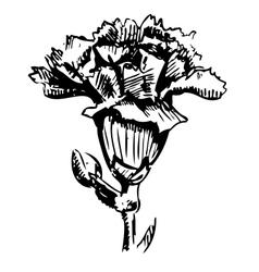 Garden carnation sketch vector image