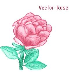 Gentle watercolor rose vector image