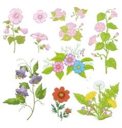 Cultivated flowers set vector