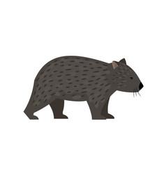 exotic australian animal wombat vector image