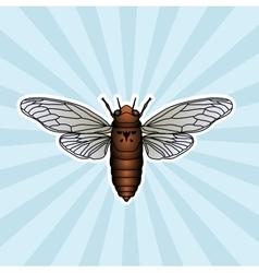 Insect anatomy Sticker cicada Cicadidae vector image