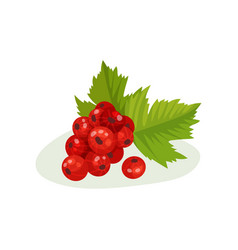 red currants with green leaves sweet small vector image