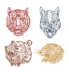 the face of brown grizzly bear leopard and jaguar vector image