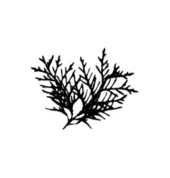 Thuja tree leave silhouette plant and nature vector