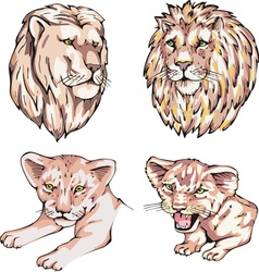 Heads of lions and lion cubs vector