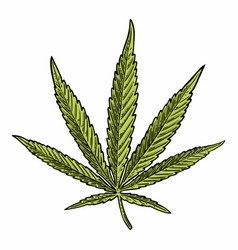 marijuana leaf vintage black engraving vector image vector image