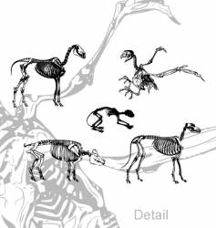 animals skeleton vector image vector image