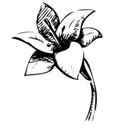 Lily flower sketch vector image vector image