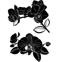 orchid flowers isolated on white background vector image
