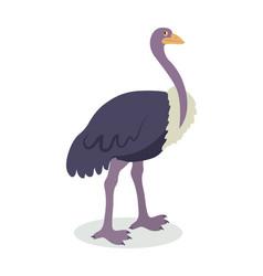 Ostrich cartoon flat vector
