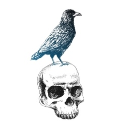 Raven on the skull vector