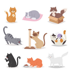 funny cartoon cats characters different breeds vector image