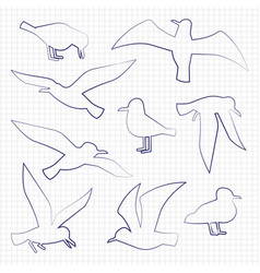 thin line birds silhouettes vector image