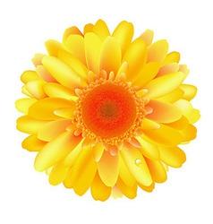 Yellow Gerber vector image