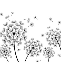 white background with stylized black dandelion vector image vector image