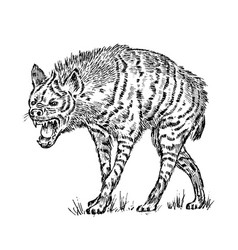 African spotted hyena wild animal engraved hand vector