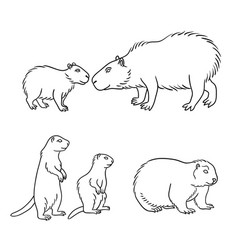 set 2 rodents in contours vector image