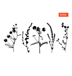 set silhouettes wild flowers vector image