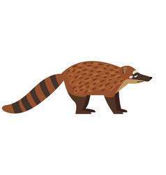 tailed exotic coati animal vector image